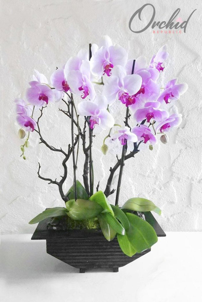 Adorable Orchids