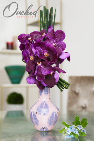 Amethyst Orchids