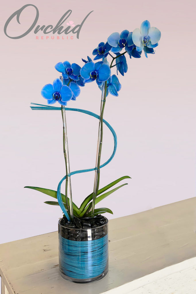 Blue Moon Orchids