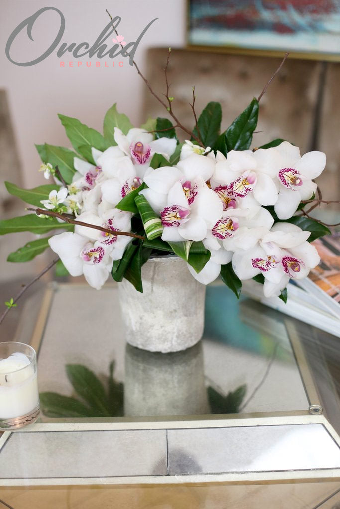 Glorious White Orchids
