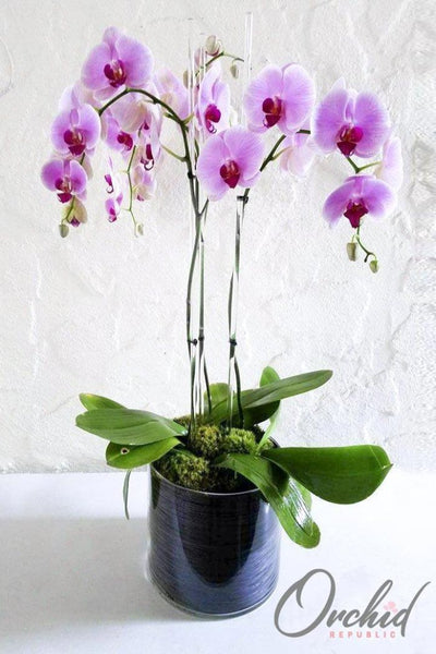 I Heart Orchids