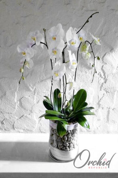 Orchid Philosophy