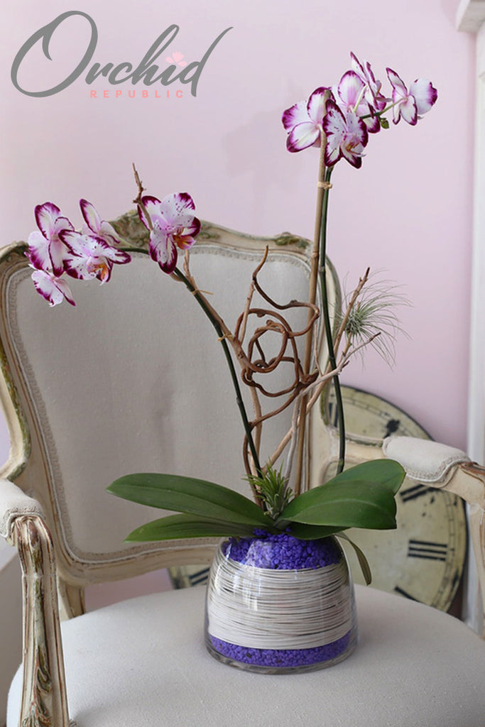 Magic Art Orchids