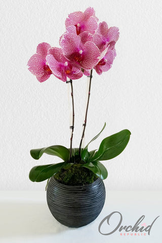 Pink Princess Orchids