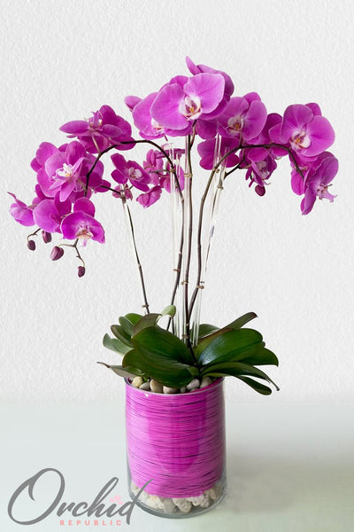 Purple Rain Orchids