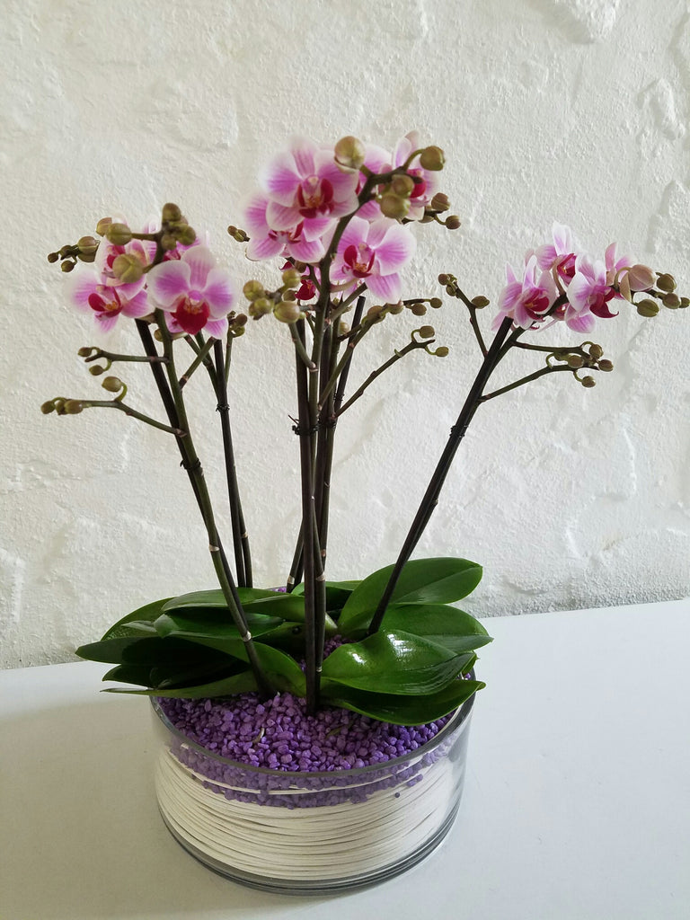 Pretty in Pink Orchids
