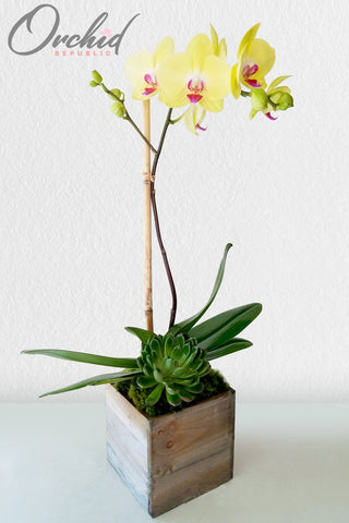 The Happy Orchid