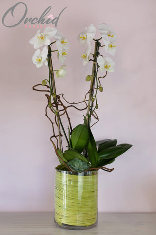 Unity Orchids
