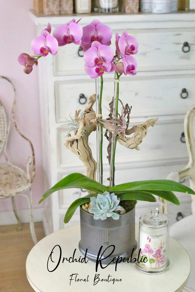 Lauren Canyon Orchids