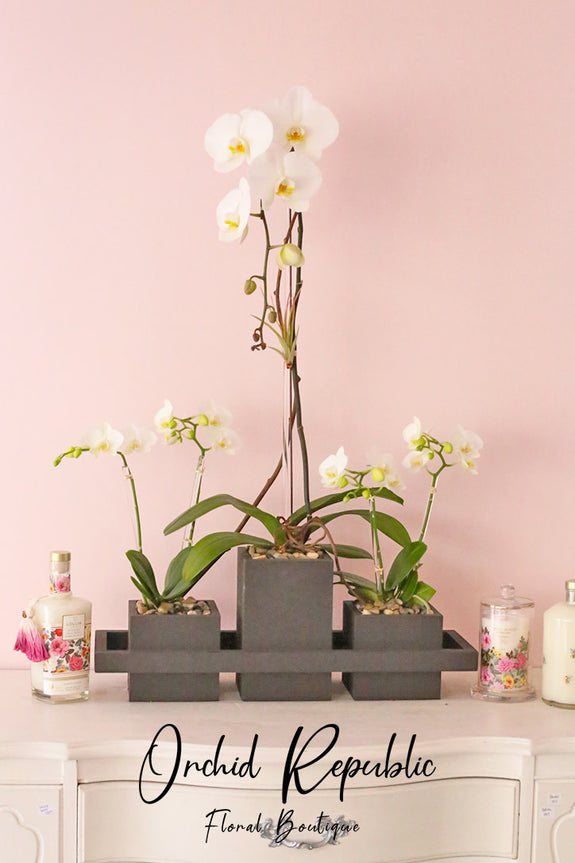 Mother's Orchid Trio