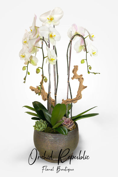 White Pacific Orchids