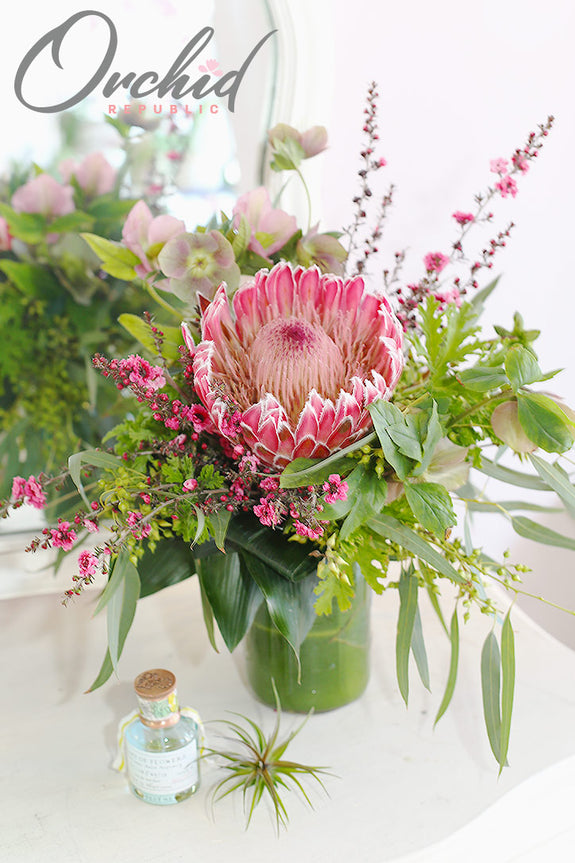 Protea Blooming