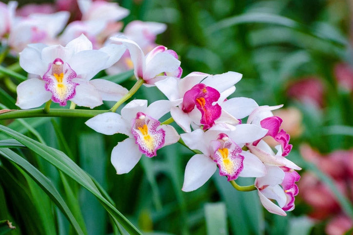 Learn More About Orchids