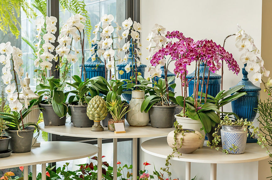 A collection of beautiful orchid arrangements and plants