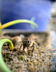 provide an oasis for bees