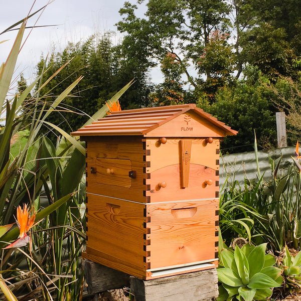 Flow Hive Classic Cedar 6 Frame – Character Grade