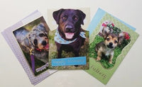 Birthday Cards 6pk