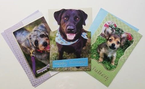 Dog and Puppy Birthday Cards 3pk