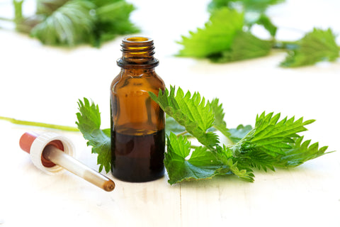 Nettle leaf extract joshica beauty