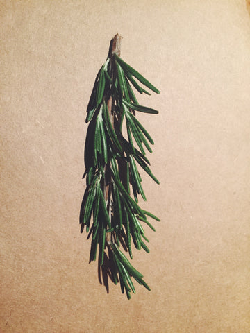 flat lay bright green rosemary sprig on a light brown backdrop