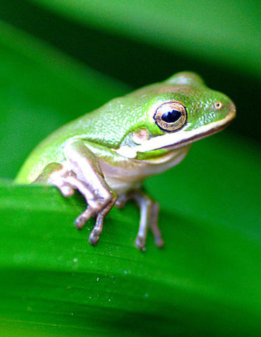 Why are frogs so important for our environment?