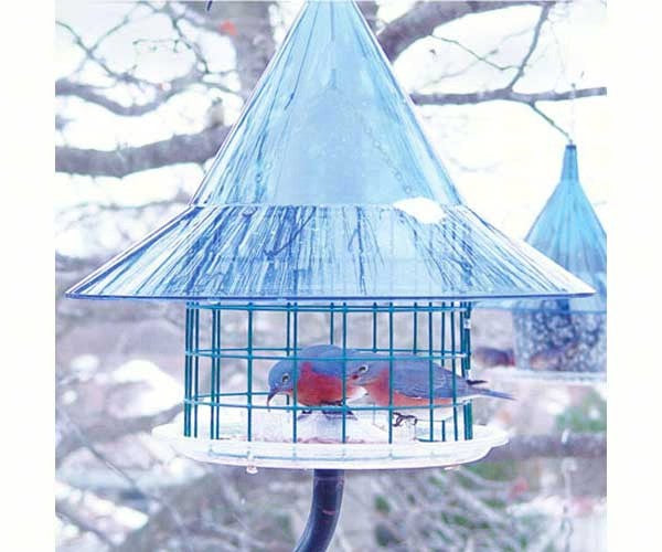 Bird Feeder-Wire Cylinder-Protection-Bluebirds-Sky Cafe