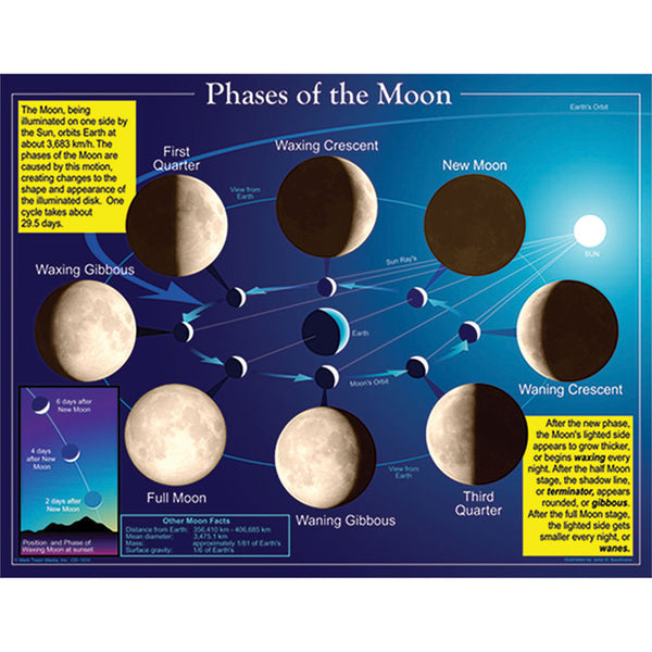 The Solar System-Bulletin Board Chart-Phases of the Moon