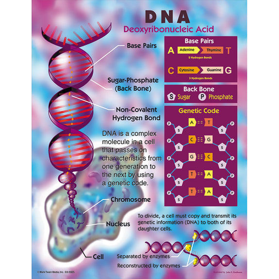 Educational-Life Science-Bulletin Board Chart-DNA