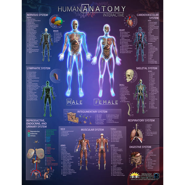 Educational-The Human Body-Interactive Smart Chart-Anatomy