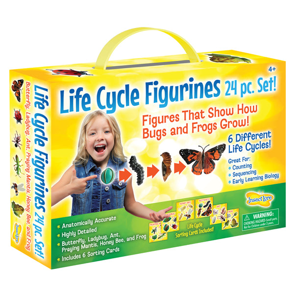 Educational-Figurines-Life Cycle-Bugs-Frogs