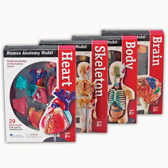 Model Anatomy Bundle Set of 132 for Grades 3 and up - Seasonal Expressions