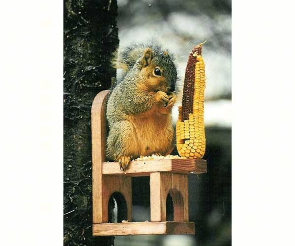 Squirrel Feeder-Chair-Nature Lover