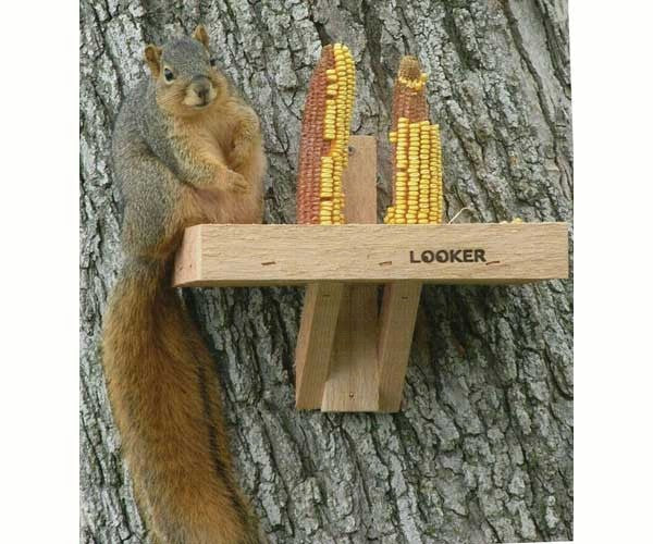 Squirrel Feeder-Nature Lover