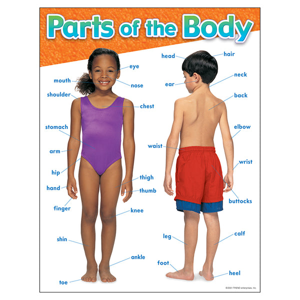 The Human Body-Bulletin Board Chart-Parts of the Body