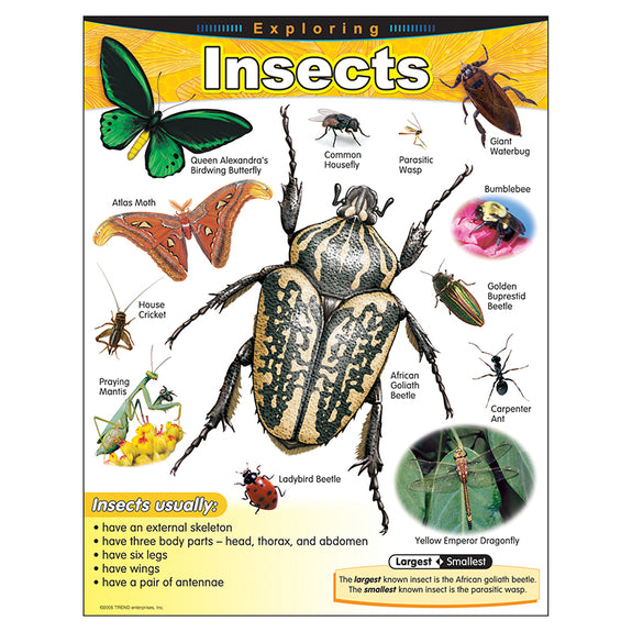 Educational-Life Science-Bulletin Board Learning Chart-Exploring Insects
