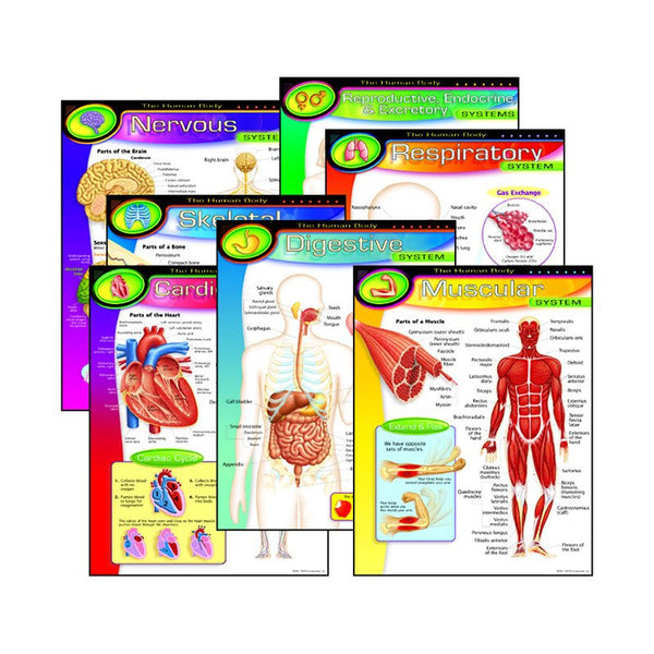 Bulletn Board Charts-Educational-The Human Body- 7 Count Pack
