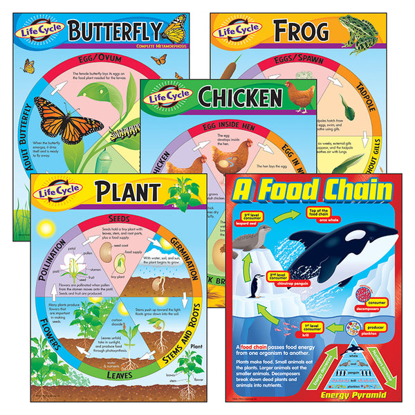 Bulletin Board Charts-Educational-Life Science-Combo Pack-Life Cycles