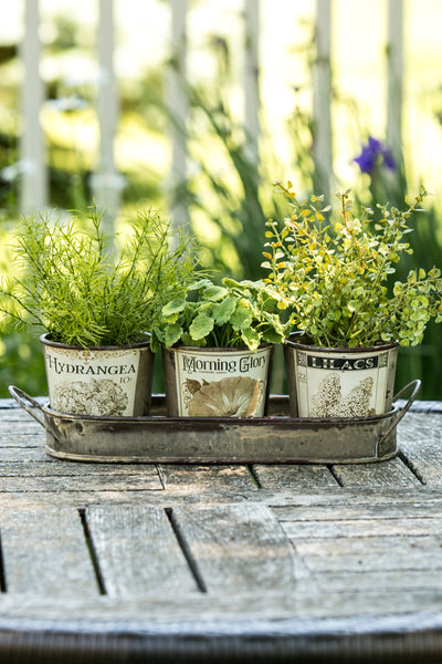 Herb Pots-Tray-Green Thumb-Heritage Lace