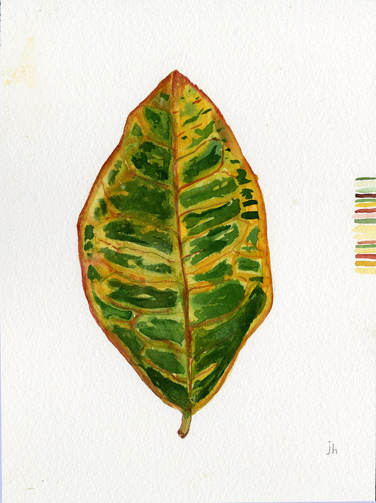 WATERCOLOR: HAWAIIN LEAF 3