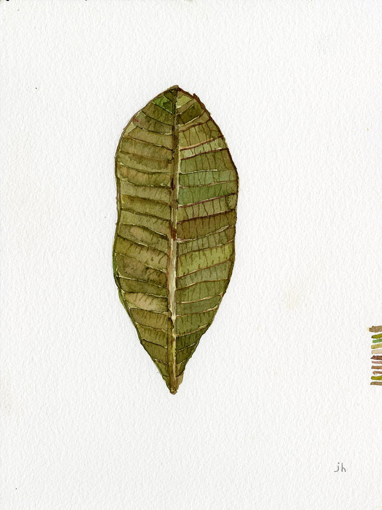 WATERCOLOR: HAWAIIN LEAF 4