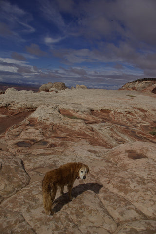 hiking with golden retriever in utah