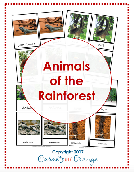 Animals of the Rainforest Montessori 3 Part Cards