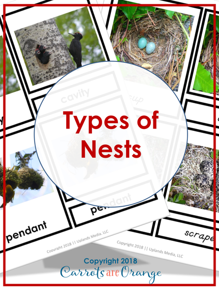 Types of Nests Montessori 3 Part Cards