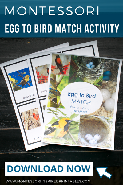 Bird to Egg Matching Activity