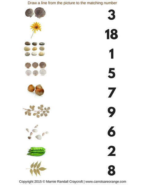 Nature Math Activities Pack - Carrots Are Orange - 8