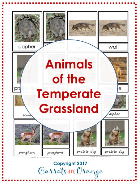 Animals of the Temperate Grassland Montessori 3 Part Cards