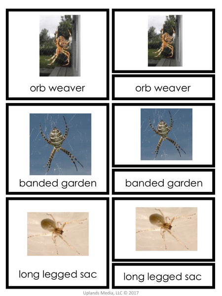 FREE - Montessori 3-Part Cards - Types of Spiders