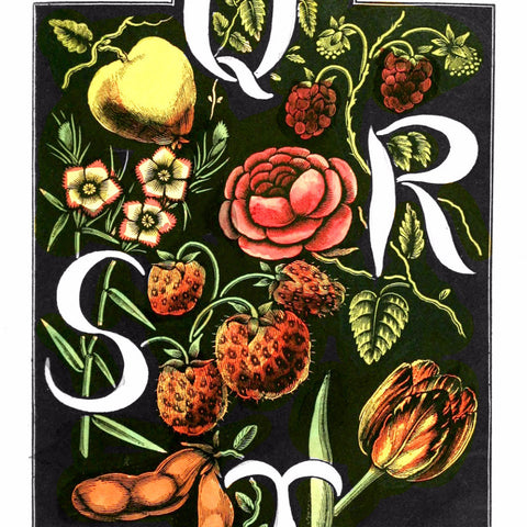 "Digital Download ""The Alphabet of Flowers and Fruit"" Q R S T (c.1856) - Instant Download Printable - ThirdShiftVintage.com"