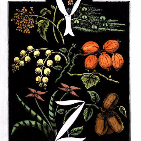 "Digital Download ""The Alphabet of Flowers and Fruit"" Y Z (c.1856) - Instant Download Printable"