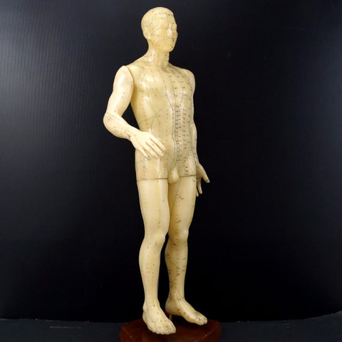 "Vintage Male Acupuncture Model with Stand, 19-1/2"" tall (c.1970s) N2 - ThirdShiftVintage.com"